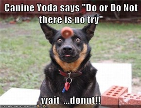 "Canine Yoda says ""Do or Do Not there is no try""  wait  ...donut!!"