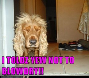 I TOLDZ YEW NOT TO BLOWDRY!!