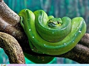 Creepictue: Green Tree Viper