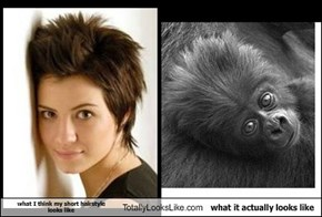 what I think my short hairstyle  looks like Totally Looks Like what it actually looks like