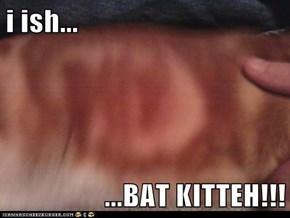 i ish...  ...BAT KITTEH!!!