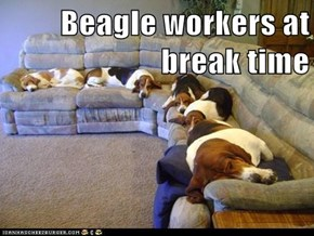 Beagle workers at break time