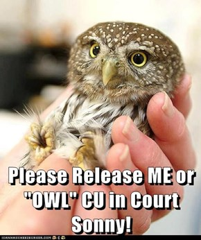 "Please Release ME or  ""OWL"" CU in Court Sonny!"