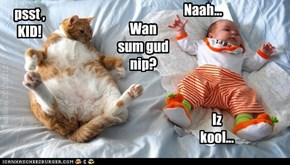 Kittehs r bad fur babees...