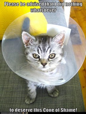 Please be advised that I did nothing whatsoever  to deserve this Cone of Shame!