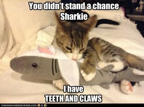 You didn't stand a chance Sharkie