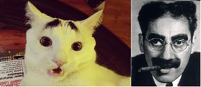 Eyebrow cat looks like Grouch Marx