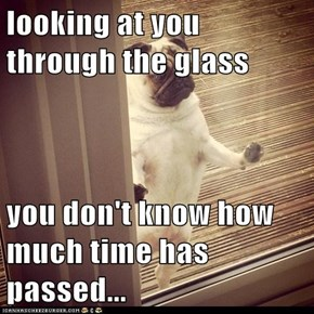 looking at you through the glass  you don't know how much time has passed...