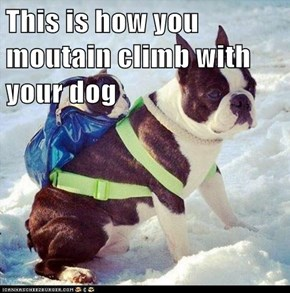 This is how you moutain climb with your dog