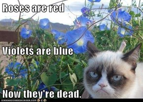 Roses are red Violets are blue Now they're dead.