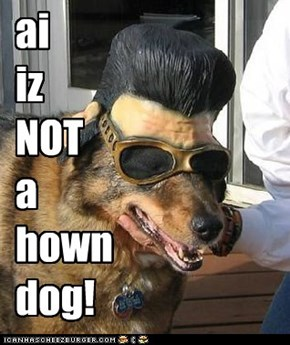 ai iz NOT a hown dog!