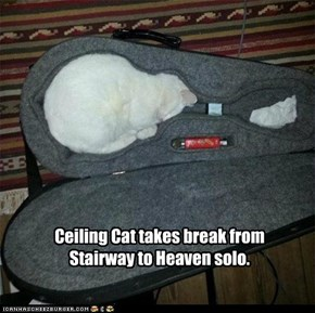 Ceiling Cat takes break from Stairway to Heaven solo.