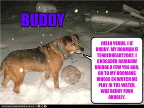 HELLO VENUS, I IZ BUDDY. MY HOOMAN IZ TENDERHEART2002. I CROSSDED RAINBOW BRIDGE A FEW YRS AGO. GO TO MY HOOMANS VIDEOS EN WATCH ME PLAY IN THE WATER, WUZ BERRY FUNN AKUALLY.