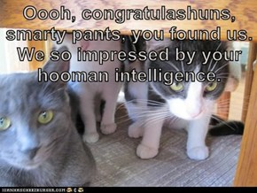 Oooh, congratulashuns, smarty pants, you found us. We so impressed by your hooman intelligence.