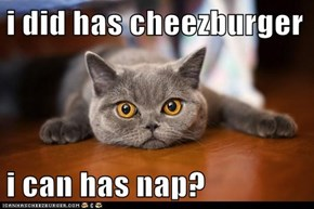 i did has cheezburger  i can has nap?