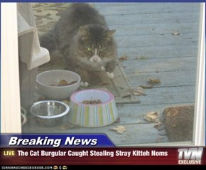 Breaking News - The Cat Burgular Caught Stealing Stray Kitteh Noms