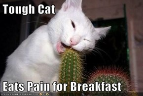 Tough Cat  Eats Pain for Breakfast
