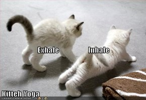 Exhale                   Inhale Kitteh Yoga