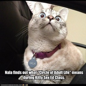 """Nala finds out what """"Circle of Adult Life"""" means during Kitty Sex Ed Class."""