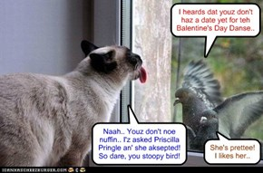 Krafty Katt has a frendly chats wiff teh birdees..