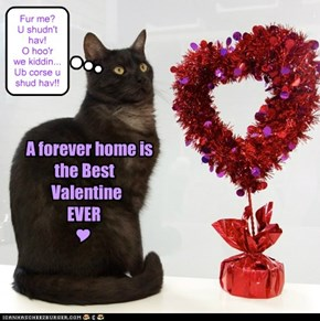 Valentine's Day... It's not just for humans