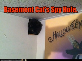 Basement Cat's Spy Hole.