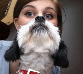 The Majestic Dog Beard