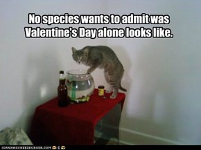 No species wants to admit was Valentine's Day alone looks like.