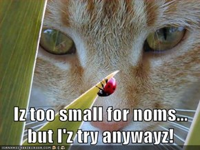 Iz too small for noms... but I'z try anywayz!