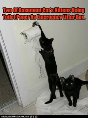 Two Of Basement Cat's Kittens Using Toilet Paper As Emergency Litter Box.