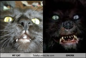 MY CAT Totally Looks Like GMORK