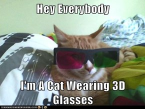 Hey Everybody  I'm A Cat Wearing 3D Glasses