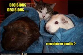 DECISIONS DECISIONS . . .
