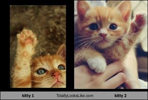 kitty 1 Totally Looks Like kitty 2