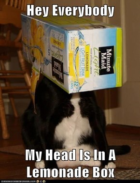 Hey Everybody  My Head Is In A Lemonade Box