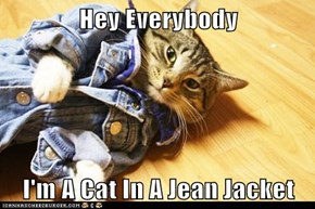 Hey Everybody  I'm A Cat In A Jean Jacket