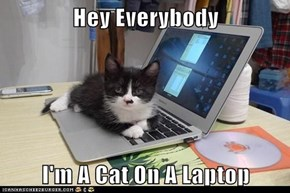 Hey Everybody  I'm A Cat On A Laptop