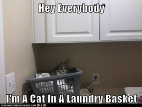 Hey Everybody  I'm A Cat In A Laundry Basket