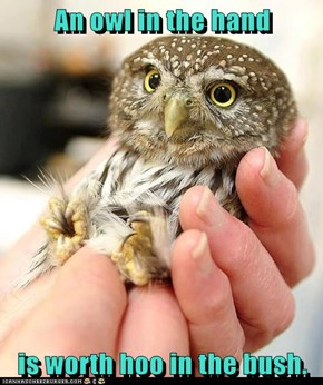 An owl in the hand  is worth hoo in the bush.
