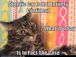 Skeptic Cat Is Not Entirely Confident What You Say Is In Fact The Case