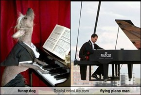 funny dog Totally Looks Like flying piano man