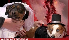 Doggie wedding video