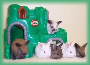 Bunday: Bunny Kindergarten