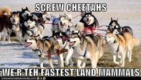 SCREW CHEETAHS   WE R TEH FASTEST LAND MAMMALS