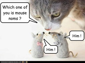Which one of you is mouse noms ?