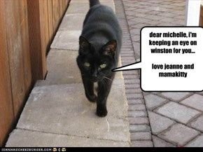 dear michelle, i'm keeping an eye on winston for you...  love jeanne and mamakitty
