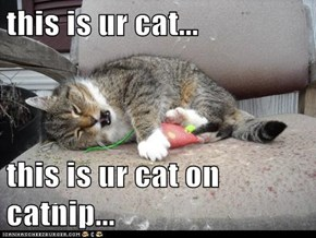 this is ur cat...  this is ur cat on catnip...