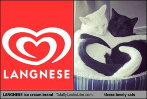 LANGNESE ice cream brand Totally Looks Like these lovely cats