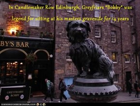 In Candlemaker Row Edinburgh, Greyfriars *Bobby* was legend for sitting at his masters graveside for 14 years