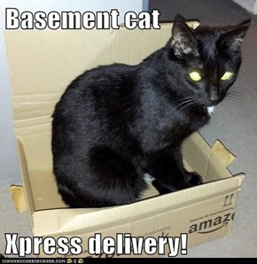 Basement cat  Xpress delivery!